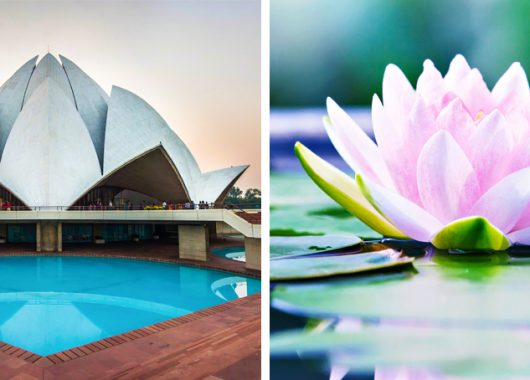 architettura imita la natura